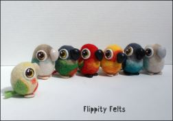 A flock of conures