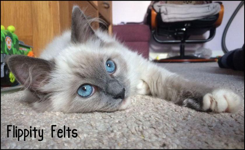 flippity felts ushi